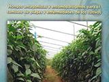 Hongos antagonistas y entomopatógenos para el combate de plagas y enfermedades de los cultivos