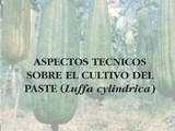 ASPECTOS TECNICOS SOBRE EL CULTIVO DEL PASTE